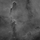 The Elephant Trunk Nebula (IC1396),                                dnault42