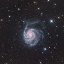 M101 Pinwheel Galaxy,                                Dennis Kaiser
