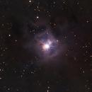 The Iris Nebula, NGC 7023,                                Evelyn Decker