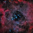 Rosette Nebula - Caldwell 49,                                Stefan Böckler