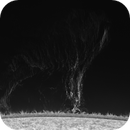 Giant Prominence 2020.05.04,                                Alessandro Bianconi