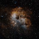 Tadpole Nebula - IC 410,                                Stephen Eggleston