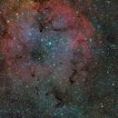 Elephant's Trunk Nebula,                                sungang