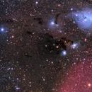 IC447, vdB76-79, vdB 82, IC446, NGC2245, NGC2247, B37; Monoceros,                                Thomas V. Davis