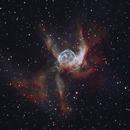 NGC2359 - Thor's Helmet,                                Michael Caligiuri