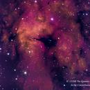 IC 1318B -  Part of the Butterfly Nebula  HOS,                                Paul Borchardt