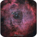 Rosette Nebula NGC 2244 Caldwell 49 - ZOO Version,                                Maicon Germiniani