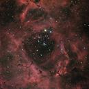 NGC 2244 neu,                                PeterN