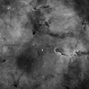 IC 1396 Elephant's Trunk Nebula,                                Yizhou Zhang