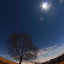 Full Moon and the Tree,                                valerio.zuffi