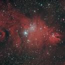 NGC2264 Nebulosa del Cono y Cúmulo Árbol de Navidad,                                Astroneck