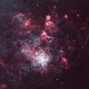Tarantula Nebula,                                Debra Ceravolo