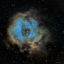 Rosette Nebula,                                Sasho Panov