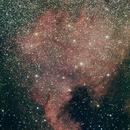 North American Nebula NGC 7000,                                Andrew Thornett