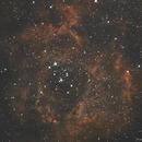 NGC 2237-Nébuleuse de la Rosette,                                Francis Couderc