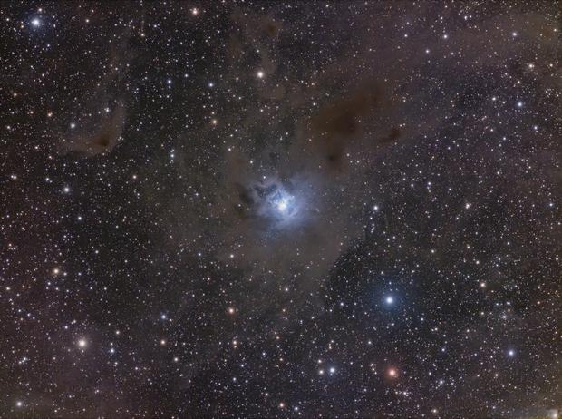 Iris Nebula (NGC 7023),                                Wesley Creech