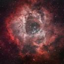 Rosette Nebula (2020+2021),                                Brett Creider