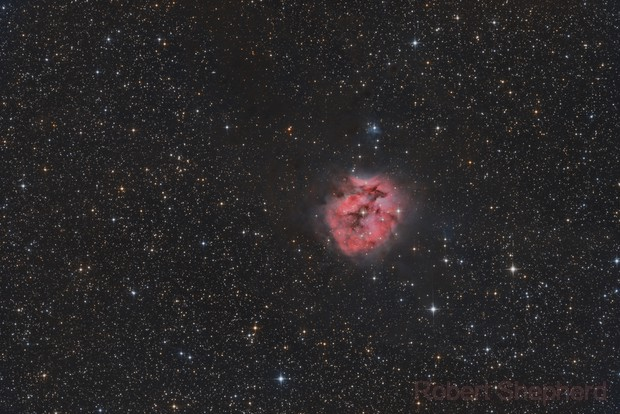 Cocoon Nebula in HaRGB - comparing cameras: 1600MM to 2600MM,                                Robert Shepherd