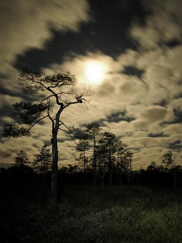 Moon light,                                Vital