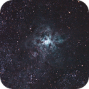 Tarantula Nebula,                                Kayne Lazarus