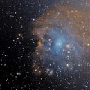 NGC 2174 Monkey Head Nebula,                                Ken Sharp