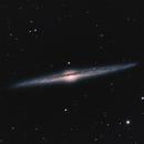 Needle Galaxy - NGC 4565,                                David Schlaudt