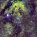 NGC6910 SHO,                                Stefano Zamblera