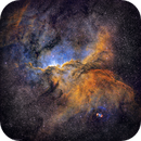 The Dragons of Ara (NGC6188),                                Stacey Williams
