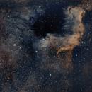 Cygnus Wall,                                Nigel Arnold