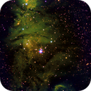 NGC2264 Christmas Tree Cluster / Cone Nebula  SHO Palette,                                Brent Jaffa