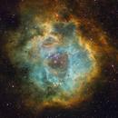 Rosette Nebula in SHO,                                Jari Saukkonen