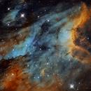 IC5070 PELICAN NEBULA,                                Caroline Berger
