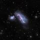 NGC 4490 - The Cocoon Galaxy (HaLRGB),                                Frank Breslawski