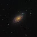 M63 (Sunflower Galaxy),                                Joel Shepherd