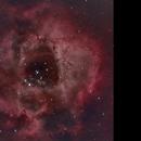 Rosette Nebula,                                Chester Li