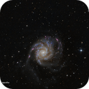 M101 RGBHa,                                José Fco. del Agu...