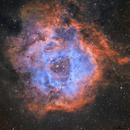 Rosette 2021,                                Matthew Enrietta