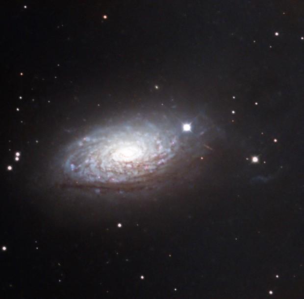 M 63 La galaxie du Tournesol,                                Roger Bertuli