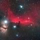 The Horsehead Nebula,                                Dick Newell