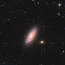 NGC2841,                                Bart Delsaert