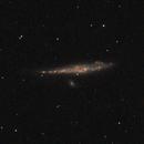 Galáxia da Baleia (Whale Galaxy) e NGC4656 ou Hockey Galaxy,                                João Gabriel Fonseca Porto