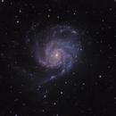 M101 in Ursa Major,                                Bob Stevenson