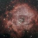 NGC 2244 - Rosettennebel,                                Horst Twele