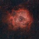 Rosette Nebula,                                DarkSwede