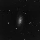 NGC 2903 in Leo,                                Bob Scott