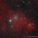 NGC 2264,                                lucasanto