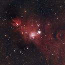 NGC2264 - Cone Nebula & Christmas Tree Cluster,                                Dale Hollenbaugh