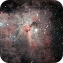 Small animals  of Eta Carinae,                                Wes Smith