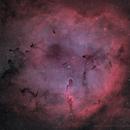 IC 1396,                                Bruce