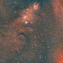 NGC 2264 Cone Nebula and Christmas Tree Nebula-Ha-HOO-Meade 80 ED triplet-Orion flattener-ASI 1600 MM-Pro,                                Adel Kildeev